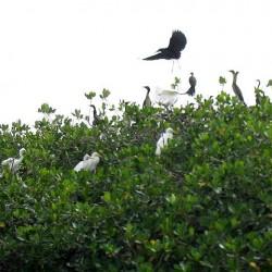 L'Ile Carabane